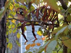 T. Hueckel: Tiger camouflaged: September 2014
